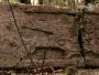Slovenski arheolog pronašao drevni grad Maja