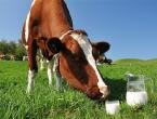 Blokiran izvoz mlijeka iz BiH
