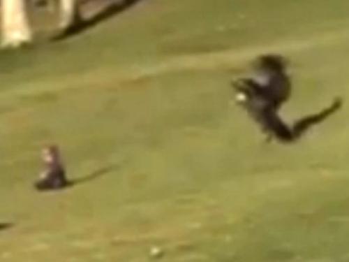 VIDEO: Orao zamalo odnio bebu
