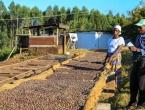 Put kave od plantaža širom svijeta do vašeg stola
