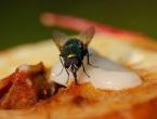 Muha na hrani je opasnija nego smo mislili
