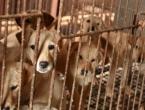 Više neće jesti pse: Zabranili prodaju psećeg mesa