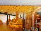 Danci prave pivo od urina