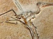 127 milijuna godina star fosil baca novo svjetlo na razvoj ptica
