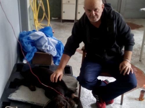 Tomislavgrad: Prvi put u povijesti obavljena transfuzija krvi psa