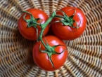 Zašto rajčica više nema okus rajčice?