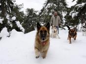 Dvije osobe zatrpala lavina, živote im spasili njihovi psi