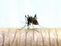 Ovo trebate znati o komarcima
