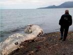 Što je to more izbacilo na obalu?