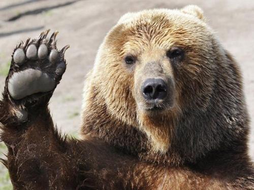 Konjic: Medvjed napao i teško ozlijedio pastira