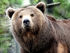 Gotovo polovica životinjskih vrsta mogla bi izumrijeti do 2050.godine