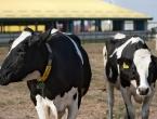 Odblokiran izvoz mesa u Tursku, izvozni objekt kompanije Bajra skinut s liste