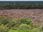 Svakih šest sekundi uništi se prašuma veličine nogometnog igrališta