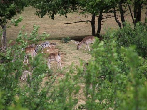 Od ratnika do uzgajivača jelena