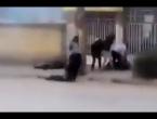 VIDEO: Iranska garda puca na prosvjednike koji vuku tijela već ubijenih