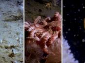 Istraživači zaronili na dubinu od 1000 metara u Južnom oceanu, pogledajte što se dolje krije