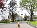 Šetnja psa uz pomoć bespilotne letjelice