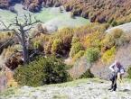 Najstarije drvo u Europi ima 1.230 godina