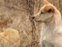 VIDEO / Dirljiva priča iz Kine: Vjerni pas čuva grob svoga preminulog vlasnika