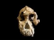 Pronađena lubanja drevnog ljudskog pretka