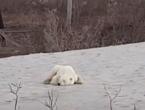 Mjesecima je vrijeme u Sibiru neuobičajeno toplo