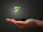 Biljke nestaju dvaput brže od životinja