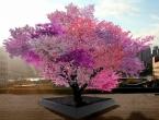 40 vrsta voća raste na ovom drvetu!