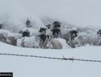 U snježnoj oluji nestale dvije osobe i stado ovaca