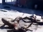 Skupina građana u Meksiku zapalila muškarce osumnjičene za otmicu djece
