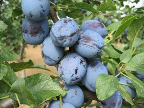 Eko plod Prozor-Rama: Poziv poljoprivrednim proizvođačima