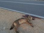 Prometna na cesti Tomislavgrad - Šujica: Stradao - vuk