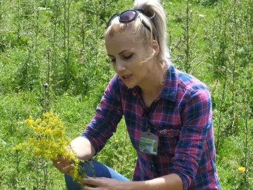 Samohrana majka uzdržava djecu berući ljekovito bilje