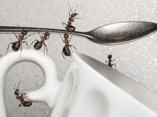 Evo kako se uspješno riješiti mrava u kući