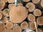 Šumarija Kupres se nada zaradi od pet milijuna KM