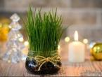 Sutra se sadi božićna pšenica: Evo nekoliko trikova kako da bude gusta i lijepa