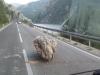 Promet teče bez zastoja; u usjecima mogući odroni