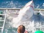 Morski pas provalio u kavez s roniocem