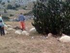 Grom usmrtio 32 ovce u vlasništvu obitelji Prskalo na planini Čabulji