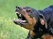 Posušje: 15-godišnjaka napao pas