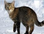 Životinje se smrzle u hodu nakon jedne od najhladnijih noći u povijesti
