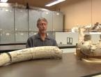 Dječak se spotaknuo, pao i otkrio fosil star više od milijun godina