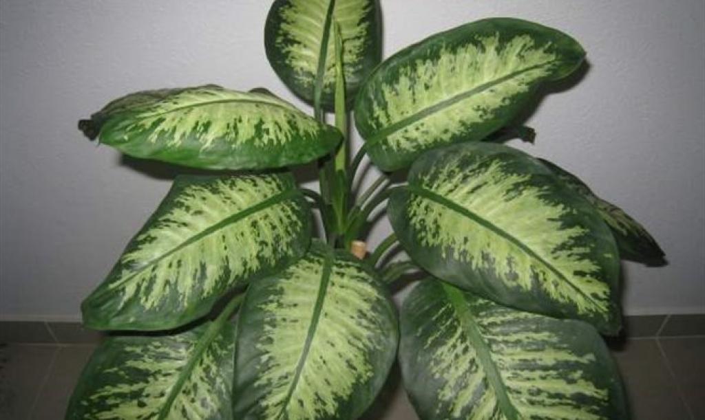 Rama-Prozor.Info • Imate li ovu biljku u kući? Izbacite ju jer vas može ubiti...